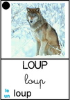 Loup - animaux