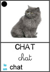 Chat - animaux