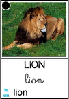 Lion - animaux