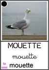 Mouette - animaux